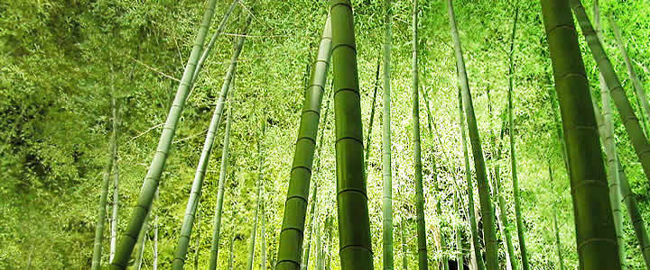 KYOTO MAP TOUR SAGANO BAMBOO FOREST